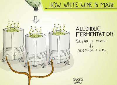 how-to-make-white-wine