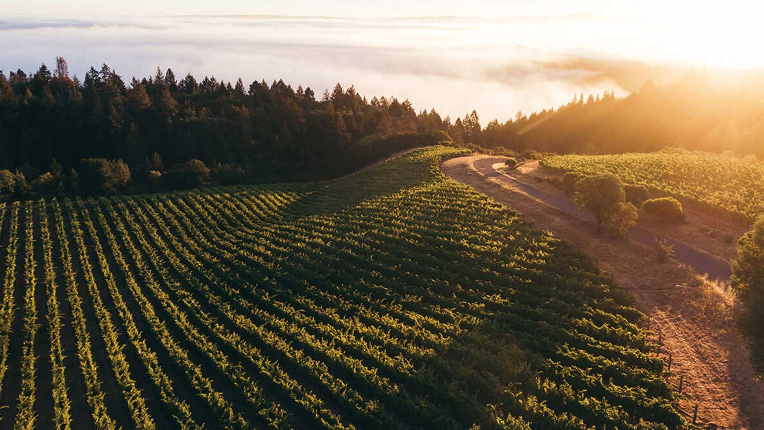 Wine Folly Napa Valley Wine Guide - Howell Mountain