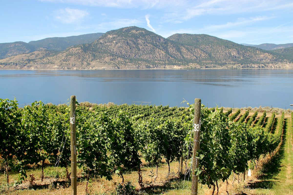 Vineyards near Okanagan Lake.