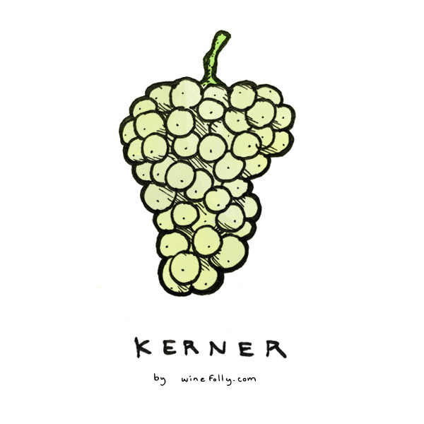 kerner-wine-grape-illustration