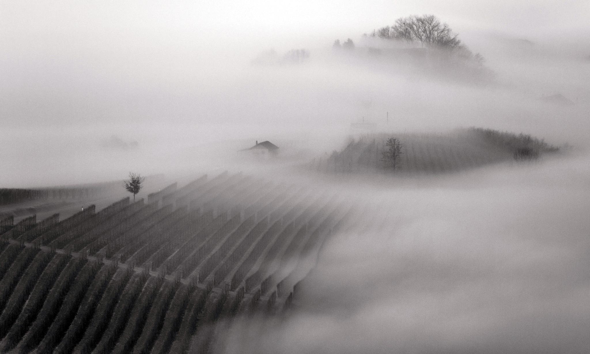 Langhe la morra piedmont fog nebbia