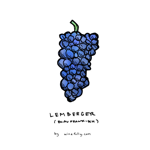 lemberger-blaufrankisch-illustration-winefolly