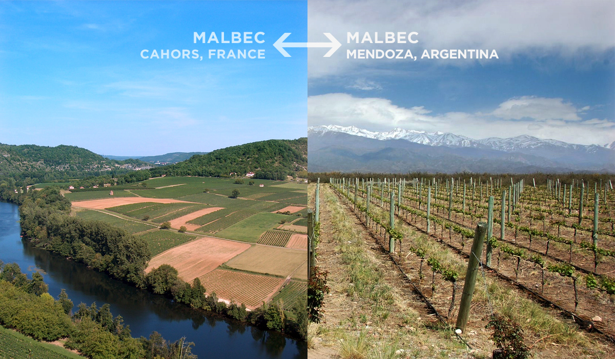 malbec-french-vs-argentina
