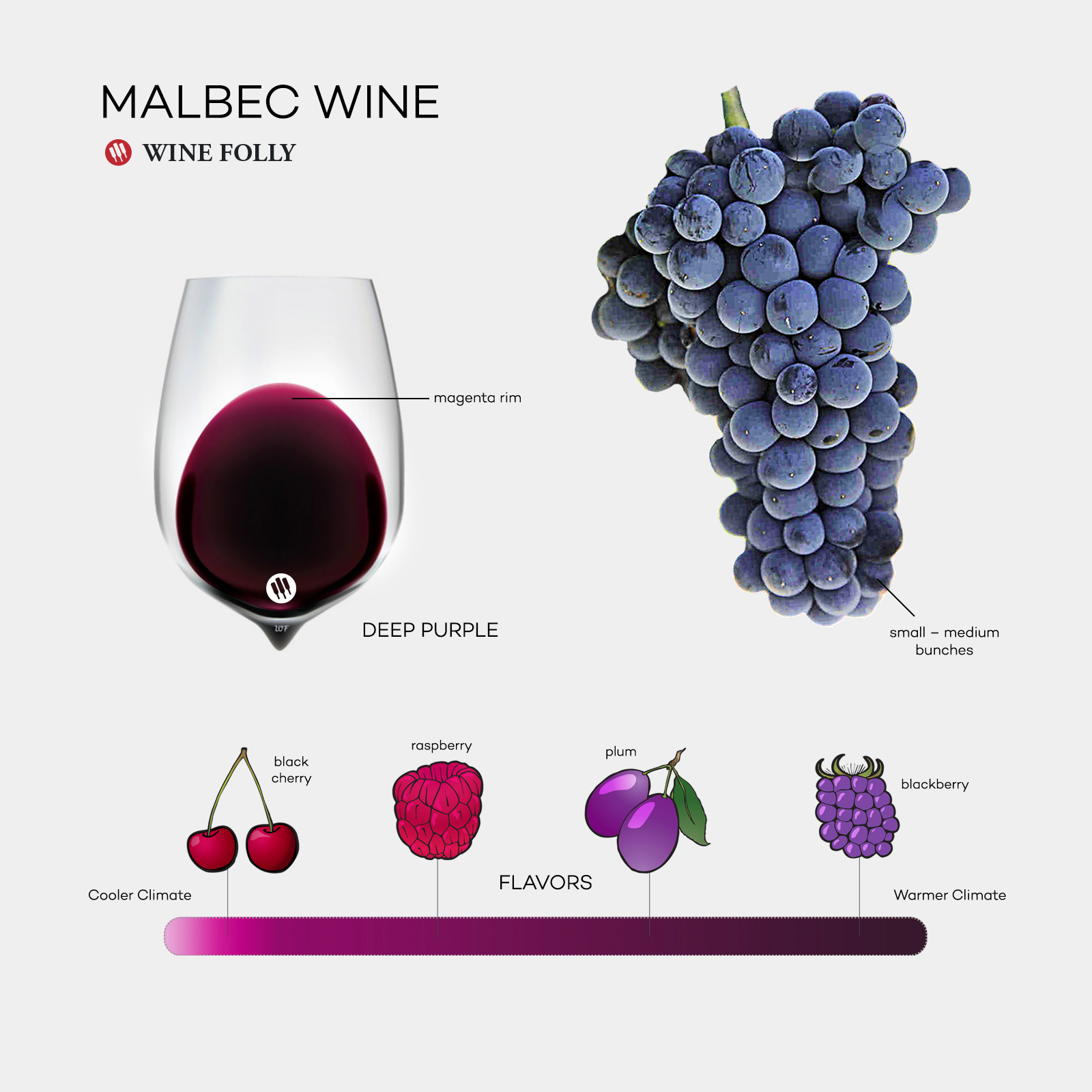 Malbec Wine 101 infographic by Wine Folly