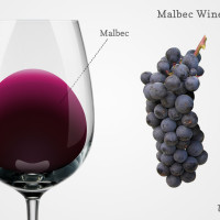 Malbec wine in a glass with grapes