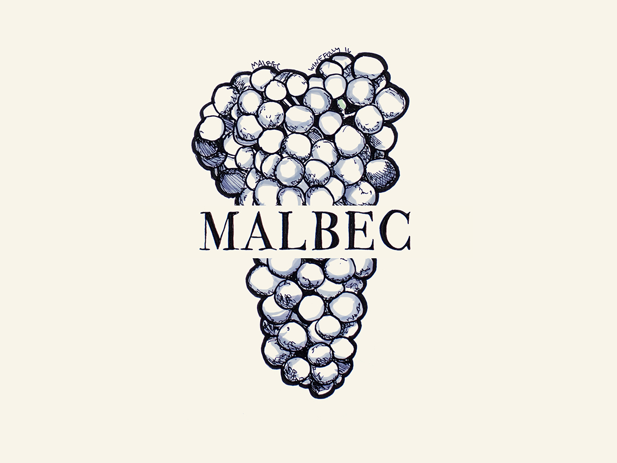 Malbec wine grapes illustration - Wine Folly