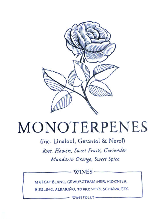 monoterpenes-illustration