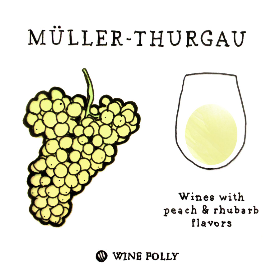 Muller-Thurgau Wine Grape illustration by Wine Folly