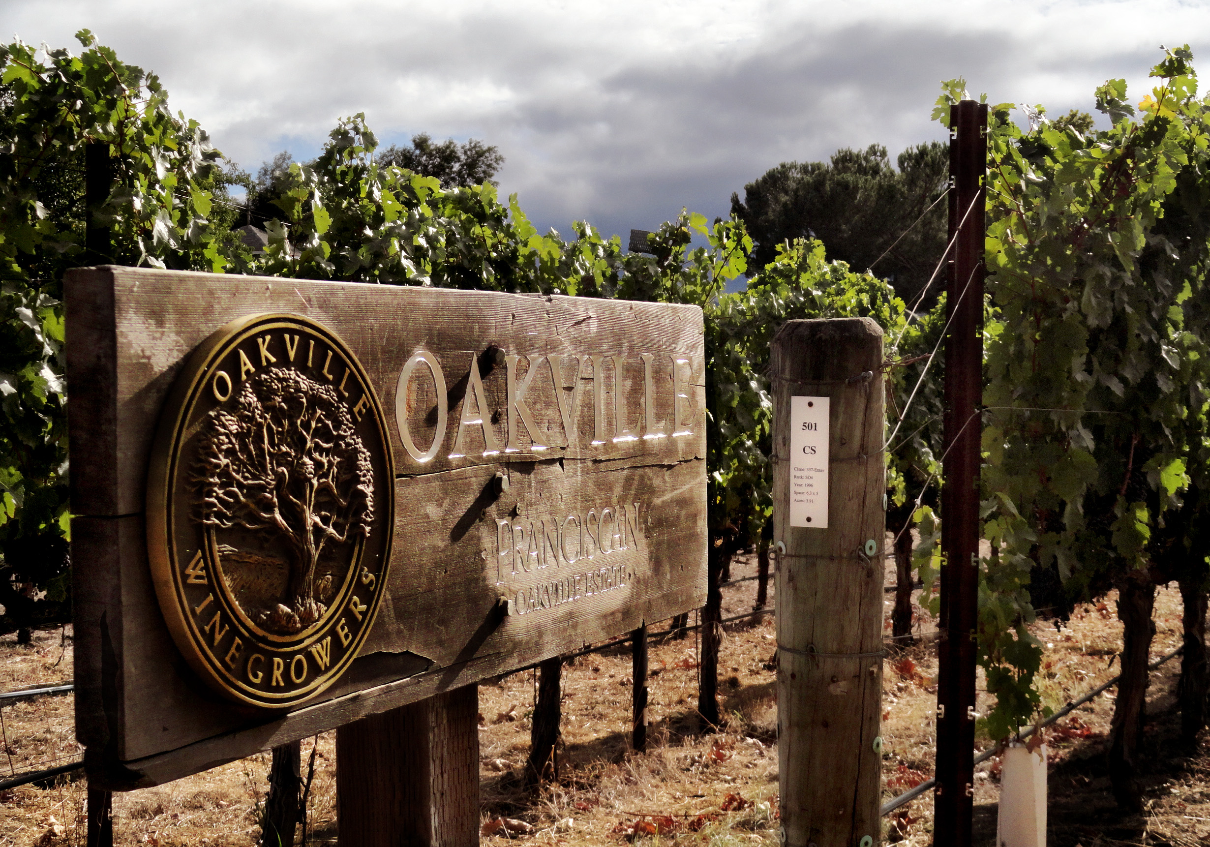Oakville Estate Clone 337 Cabernet Sauvignon in Napa Valley