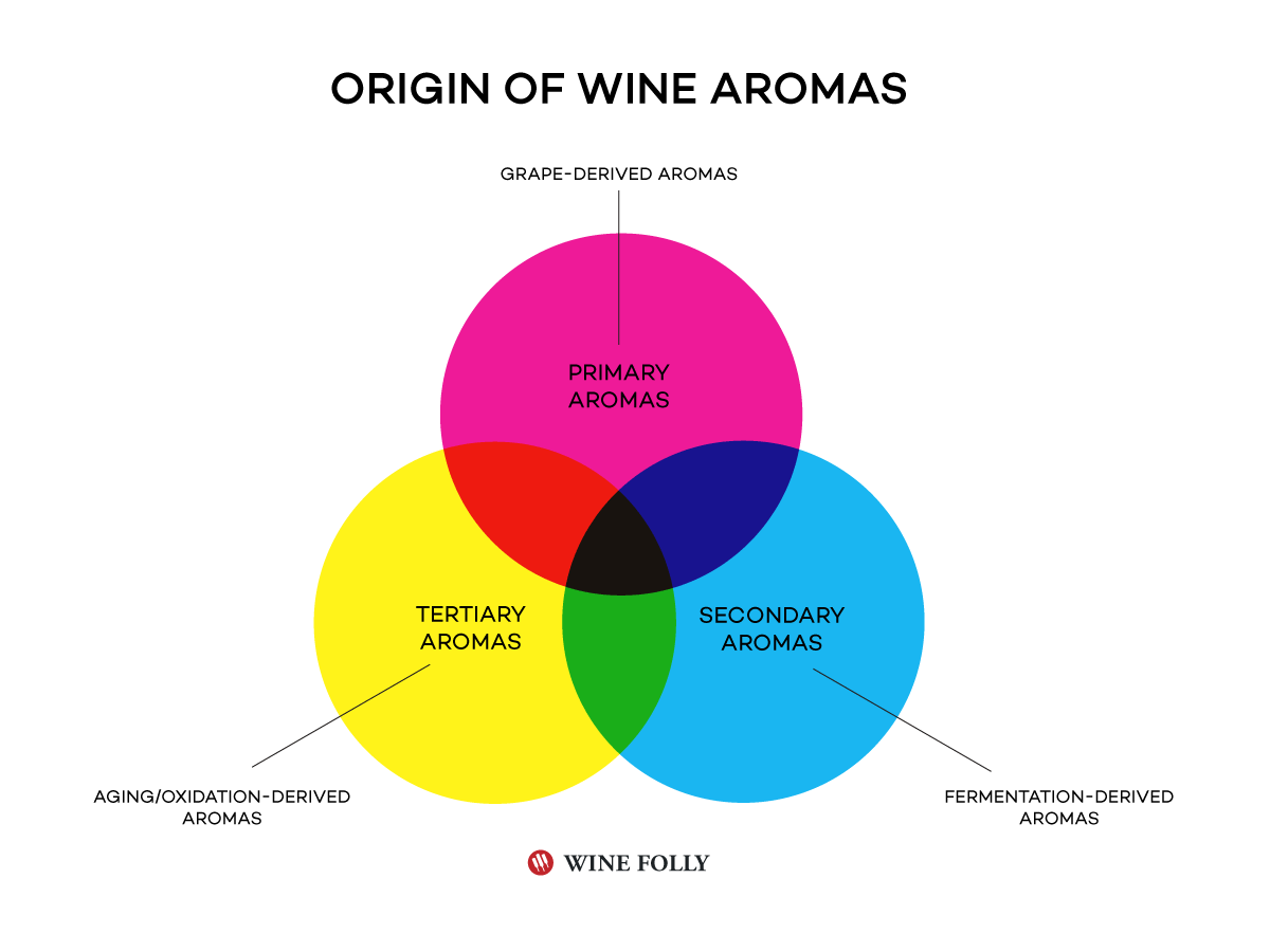 How aromas in wine are derived / where they originate from