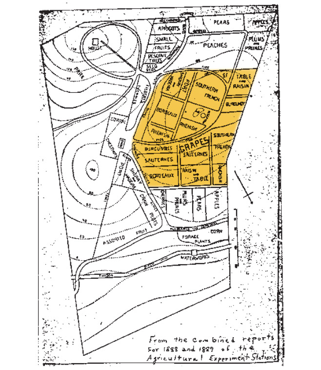 original-jackson-vineyard-map-1890-usdavis