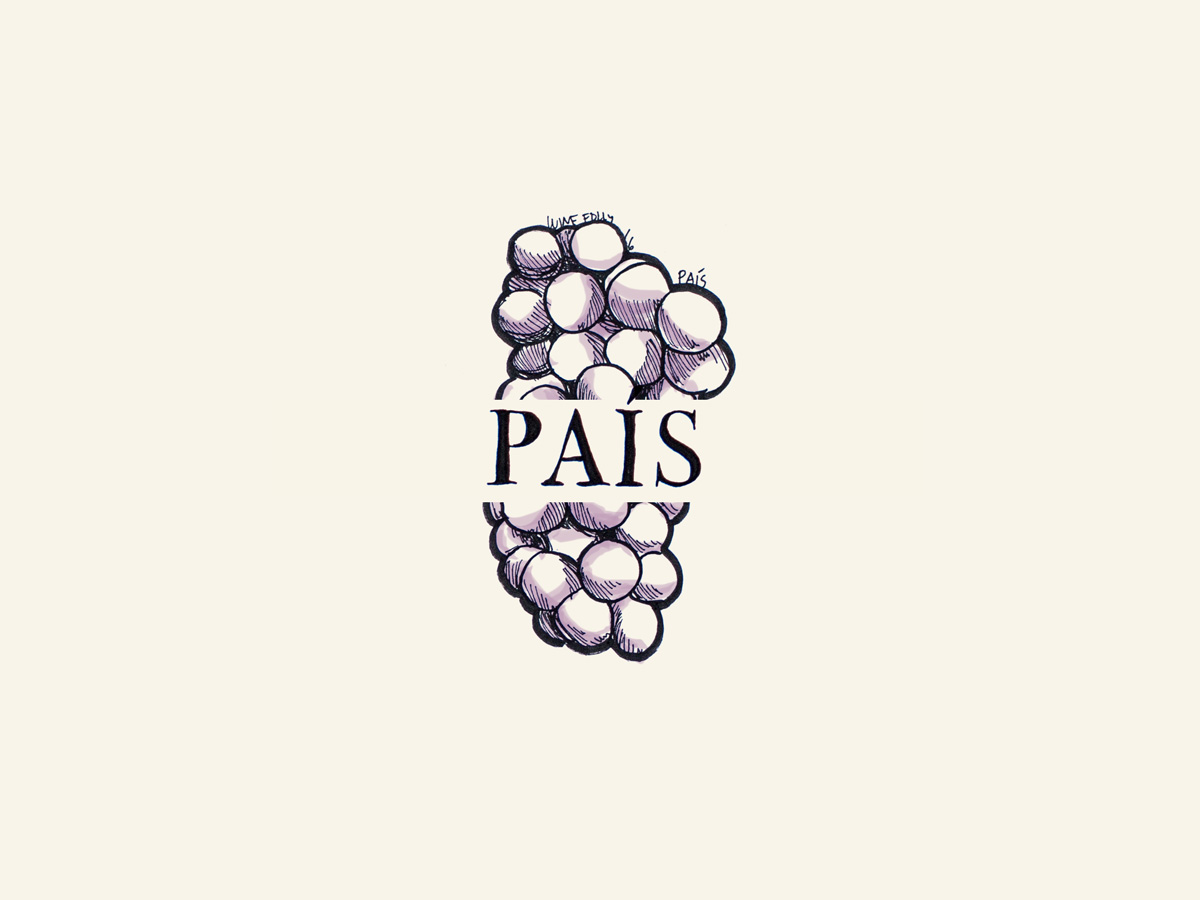 Pais (aka Mission, Misíon, Criolla) wine grapes illustration - Wine Folly
