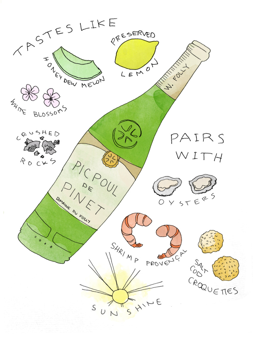 Picpoul de Pinet wine taste and food pairing illustration by Wine Folly