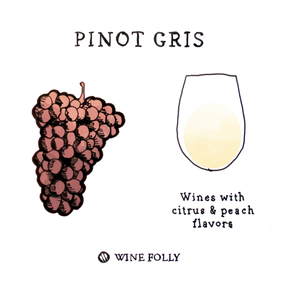 Pinot Gris Wine Grape Illustration by Wine Folly