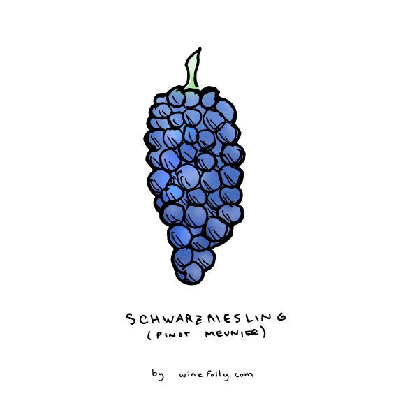 pinot-meunier-grape-illustration-winefolly