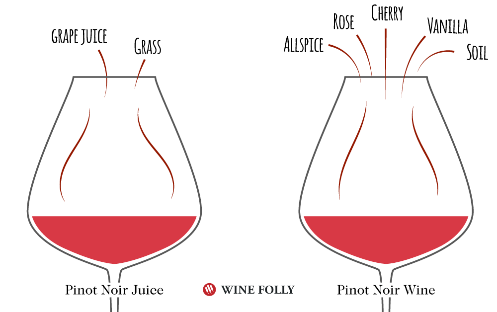 Wine Flavors in Pinot Noir Wine versus Pinot Noir Juice - Diagram by Wine Folly