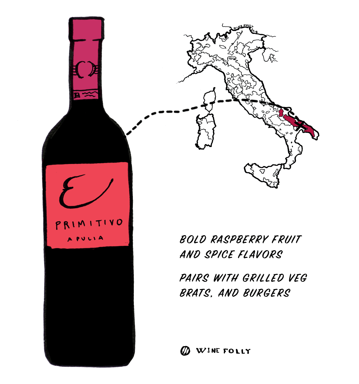 Primitivo red wine grape from Italy - Great choice for beginners into Italian wine - Illustration by Wine Folly