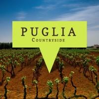 puglia-wine-country-image