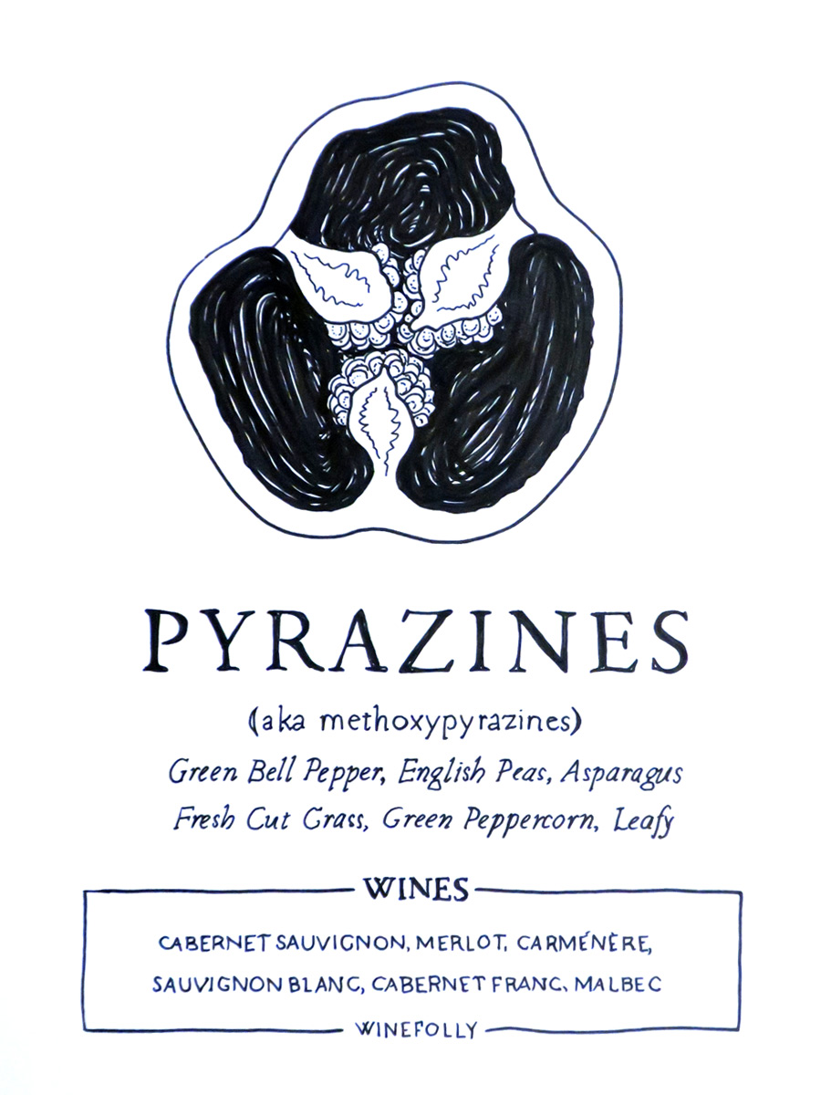 Pyrazines-illustrattion