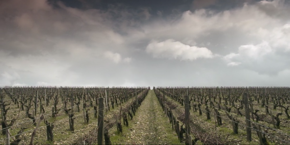 A Chinese vineyard in Red Obsession wine movie.