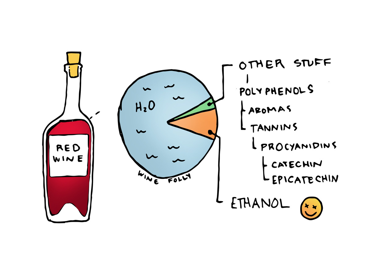 Red Wine Facts - Illustration by Wine Folly