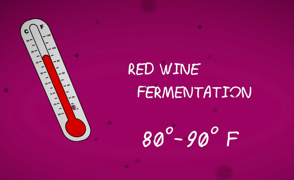 Red wine fermentation temperature between 80-90 F