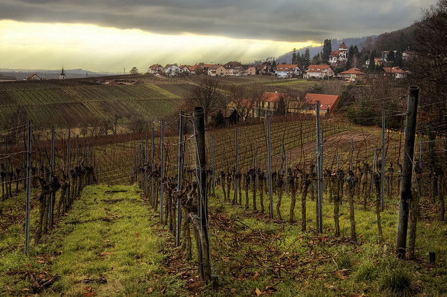 Ahr region and now more regions are growing pinot noir aka Spatburgunder in Germany