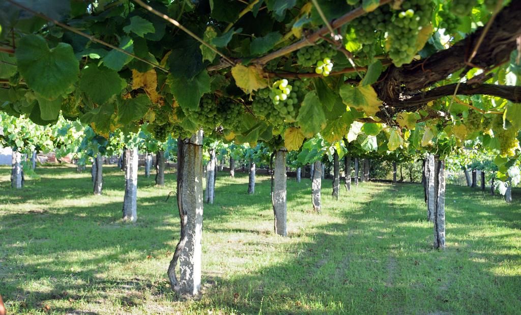 Map Of Spain Vineyards.Map Of Spain Wine Regions Wine Folly