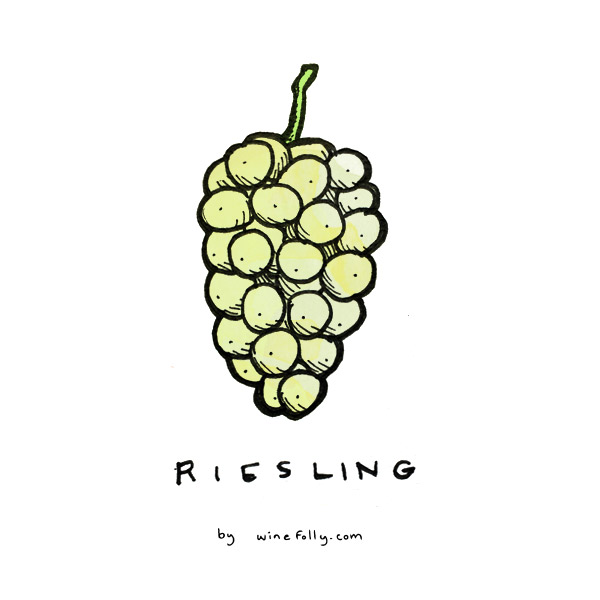 riesling-grape-illustration-winefolly