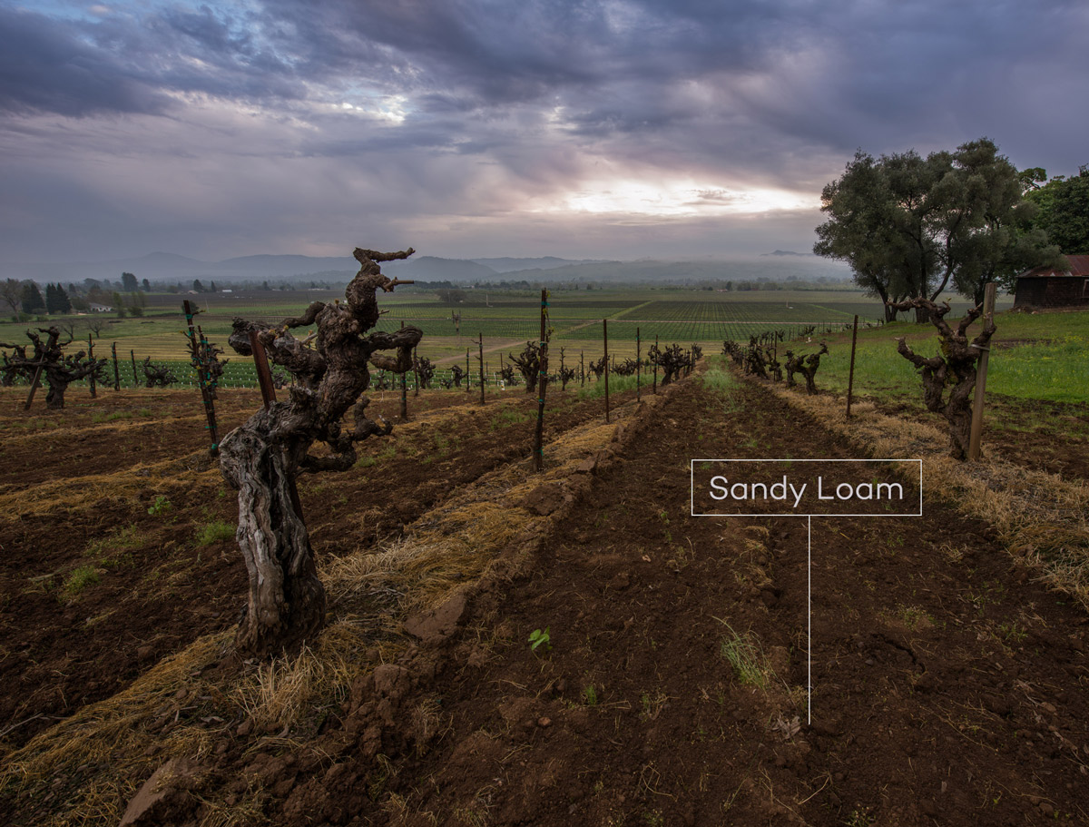 Old vine Zinfandel on sandy loam soils in Russian River Valley by Justin Kern