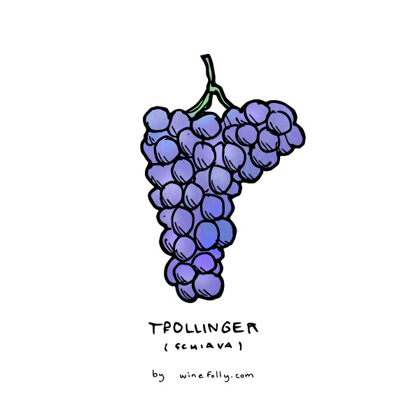 schiava-trollinger-grape-illustration-winefolly