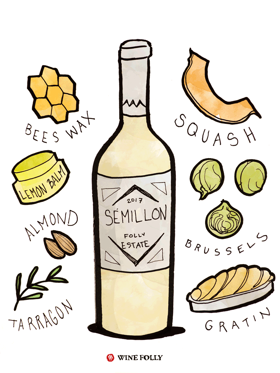 Semillon White Wine Taste & Food Pairing Illustration by Wine Folly