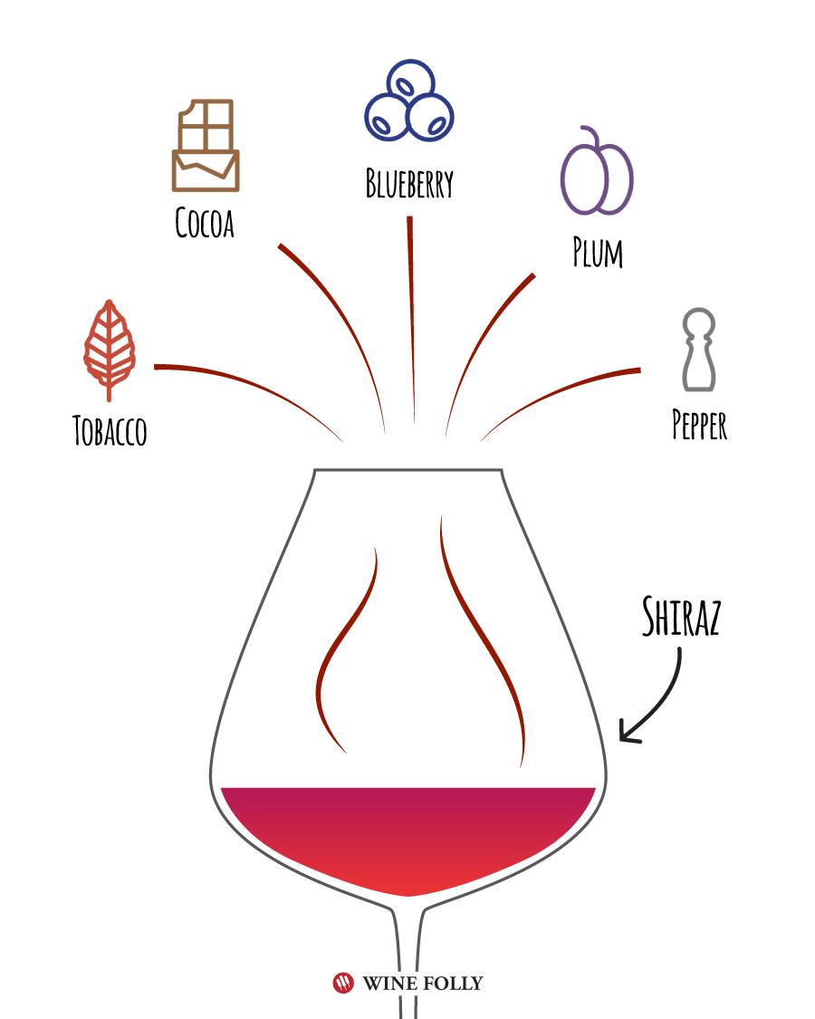 Shiraz Tasting Notes - Illustration by Wine Folly