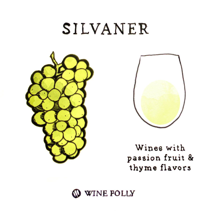 Silvaner Wine Grape Illustration by Wine Folly