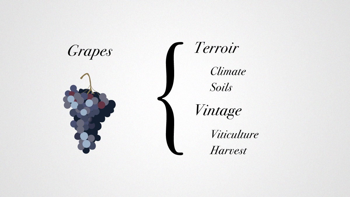 Grapes Terroir and Vintage