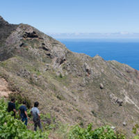 slope-vineyards-canary-islands-tenerife-jose-pastor-brian-mcclintic-jimmy-hayes