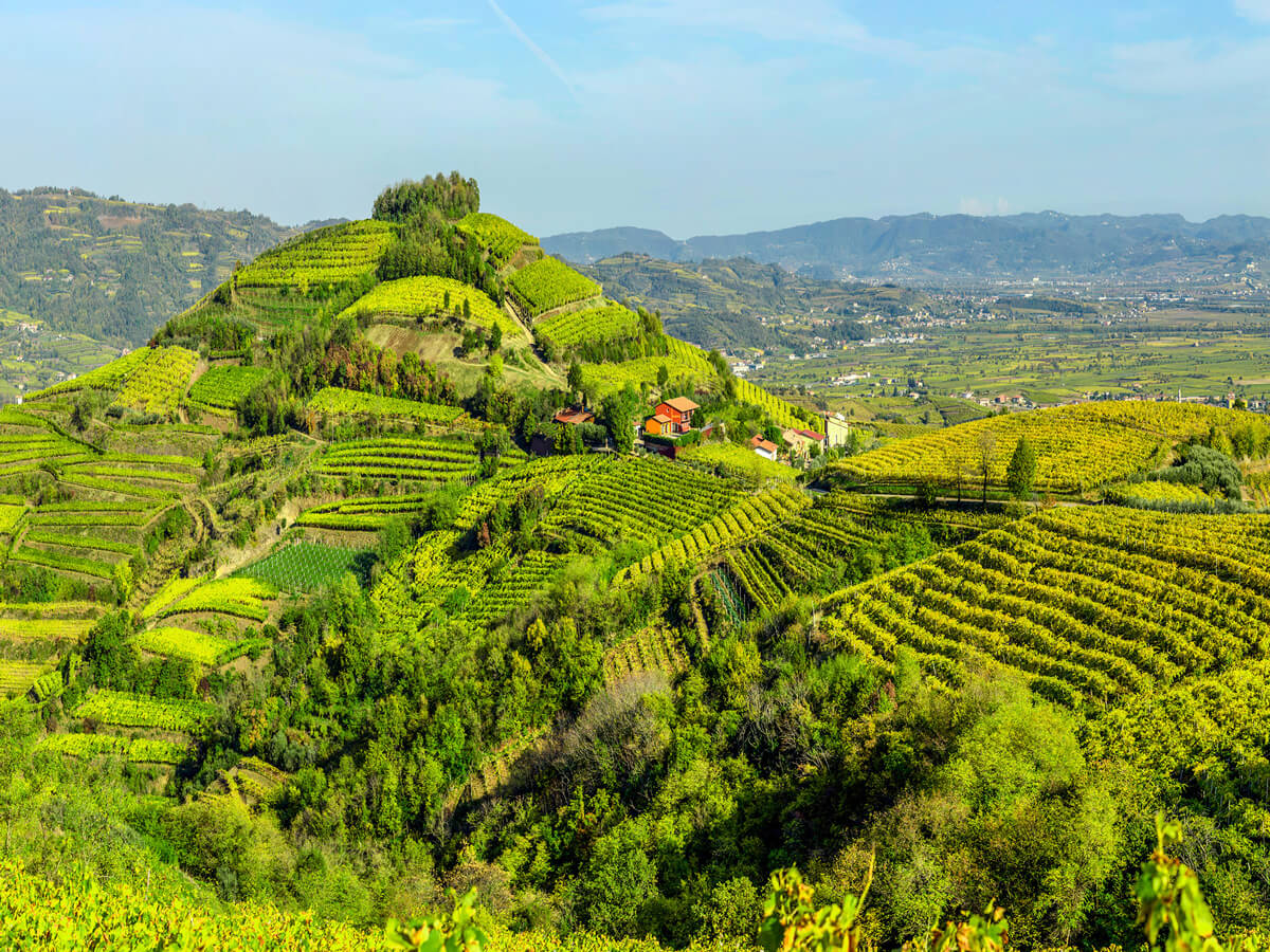 soave-hills-vineyards-vines