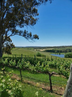 South Australia Wine Country