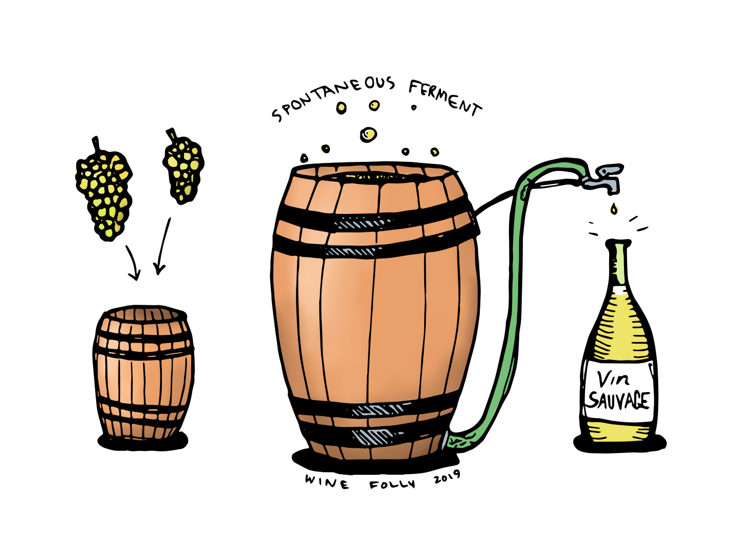 Spontaneous wild fermentation illustration native yeast by wine folly