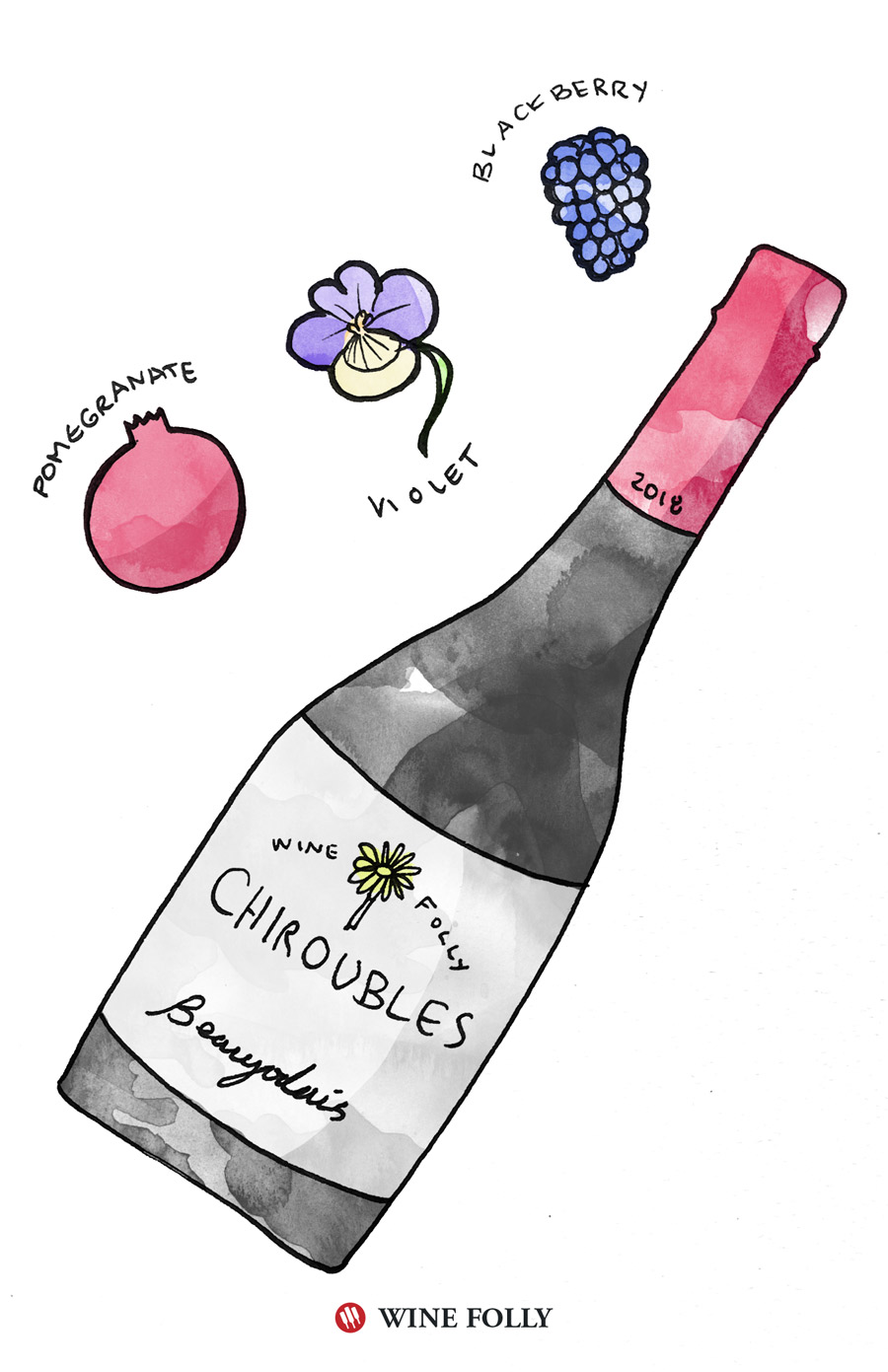 Beaujolais Tasting Notes Illustration by Wine Folly