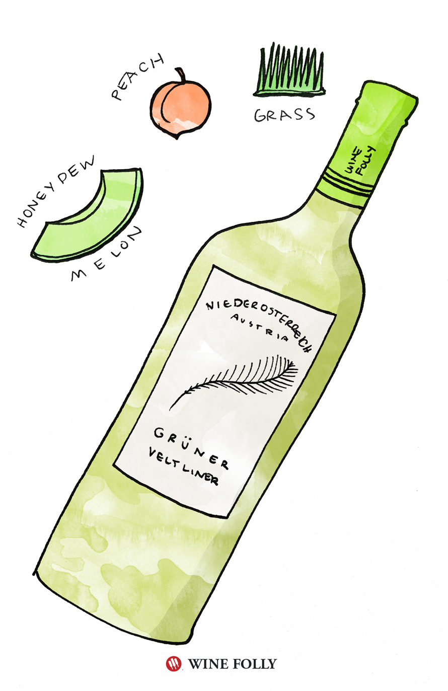 Gruner Veltliner Tasting Notes Illustration by Wine Folly