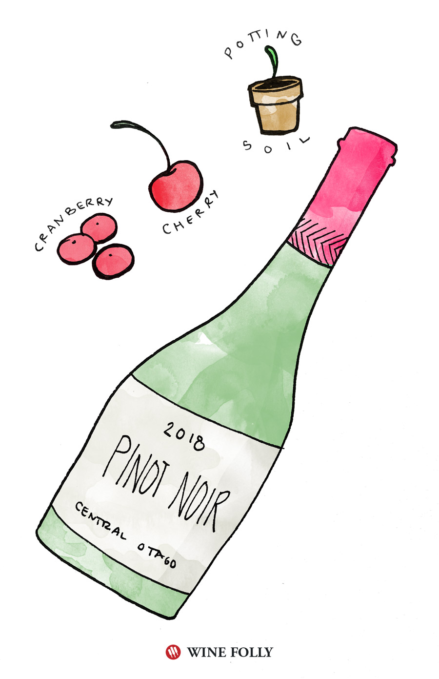 Pinot Noir Illustration by Wine Folly