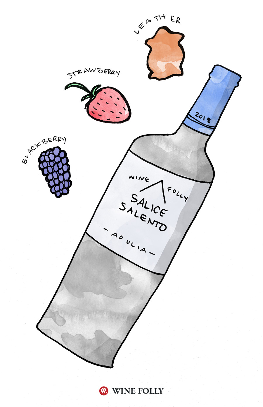 Salice Salento Tasting Notes Illustration by Wine Folly