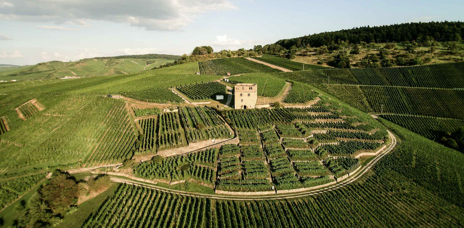 The visually stunning organic Stettener Mönchberg vineyards at Weingut Karl Haidle. Photo courtesy of Germanwines.de