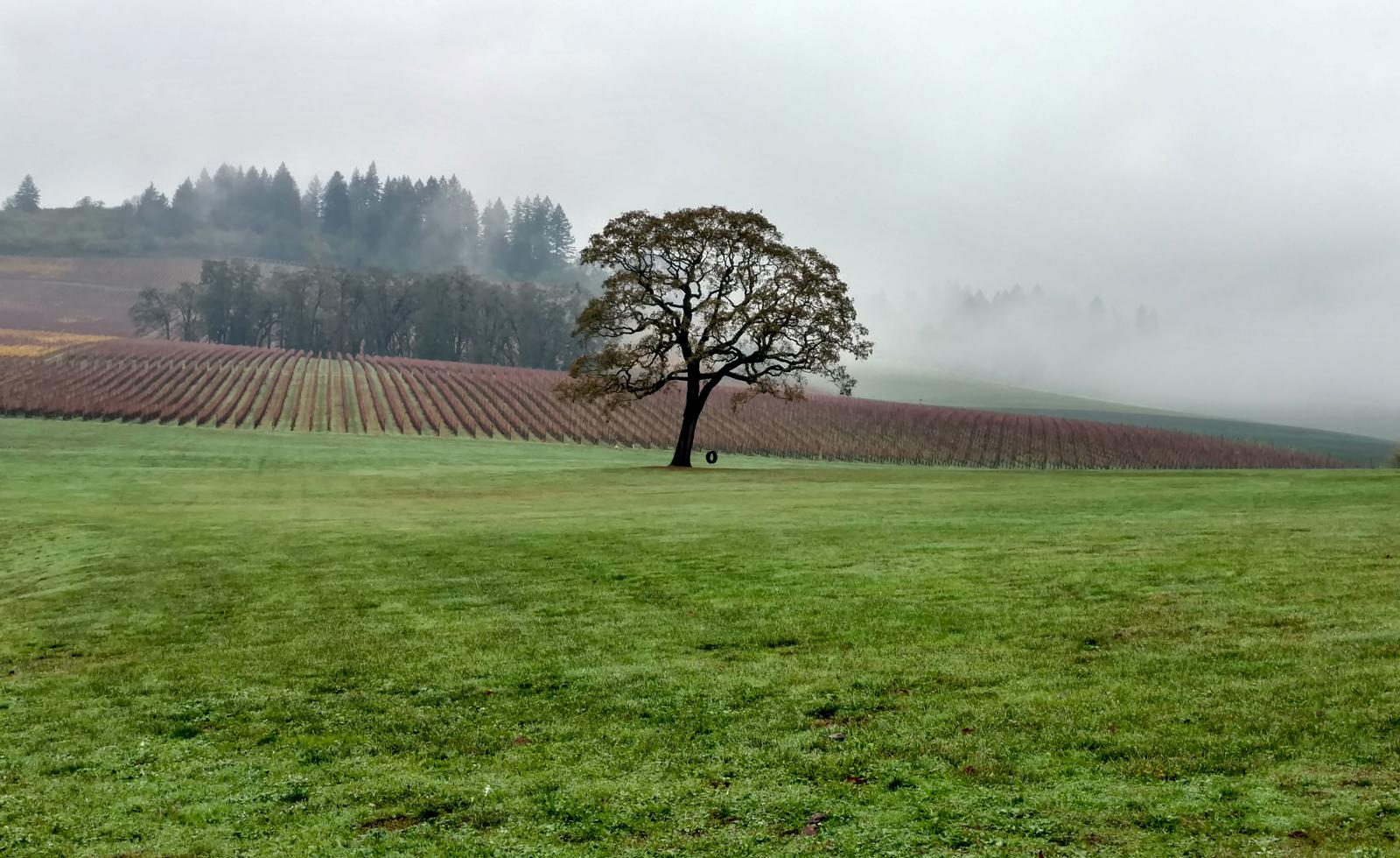 stoller-estates-dundee-hills-vineyards-winefolly-1