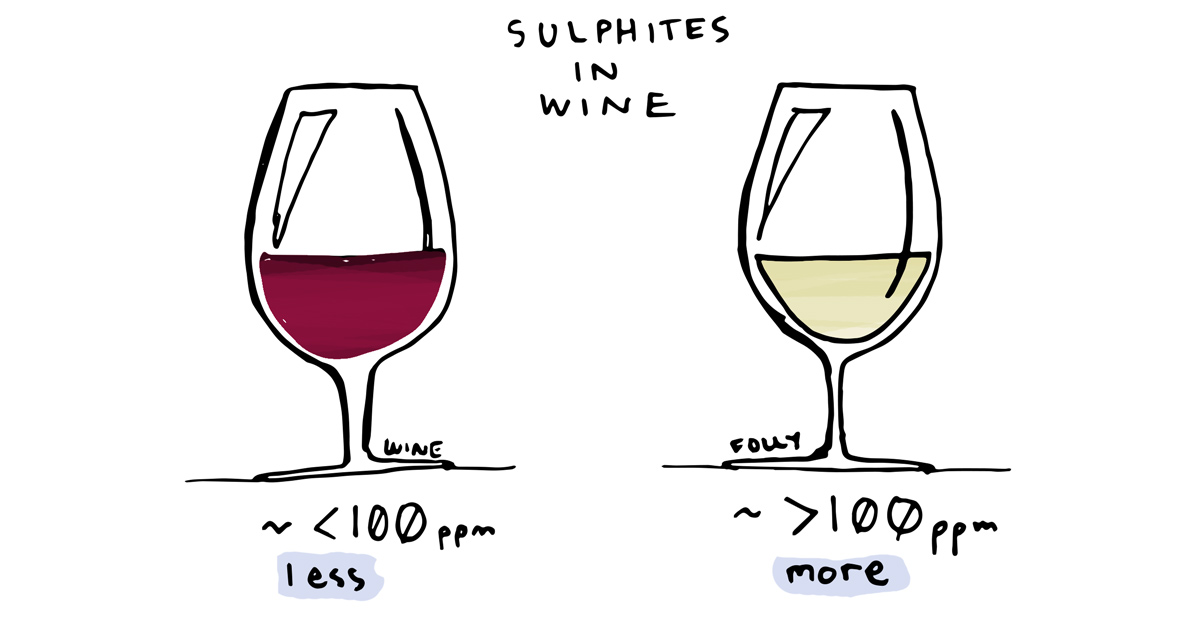 sulfites-in-wine-illustration-by-wine-folly