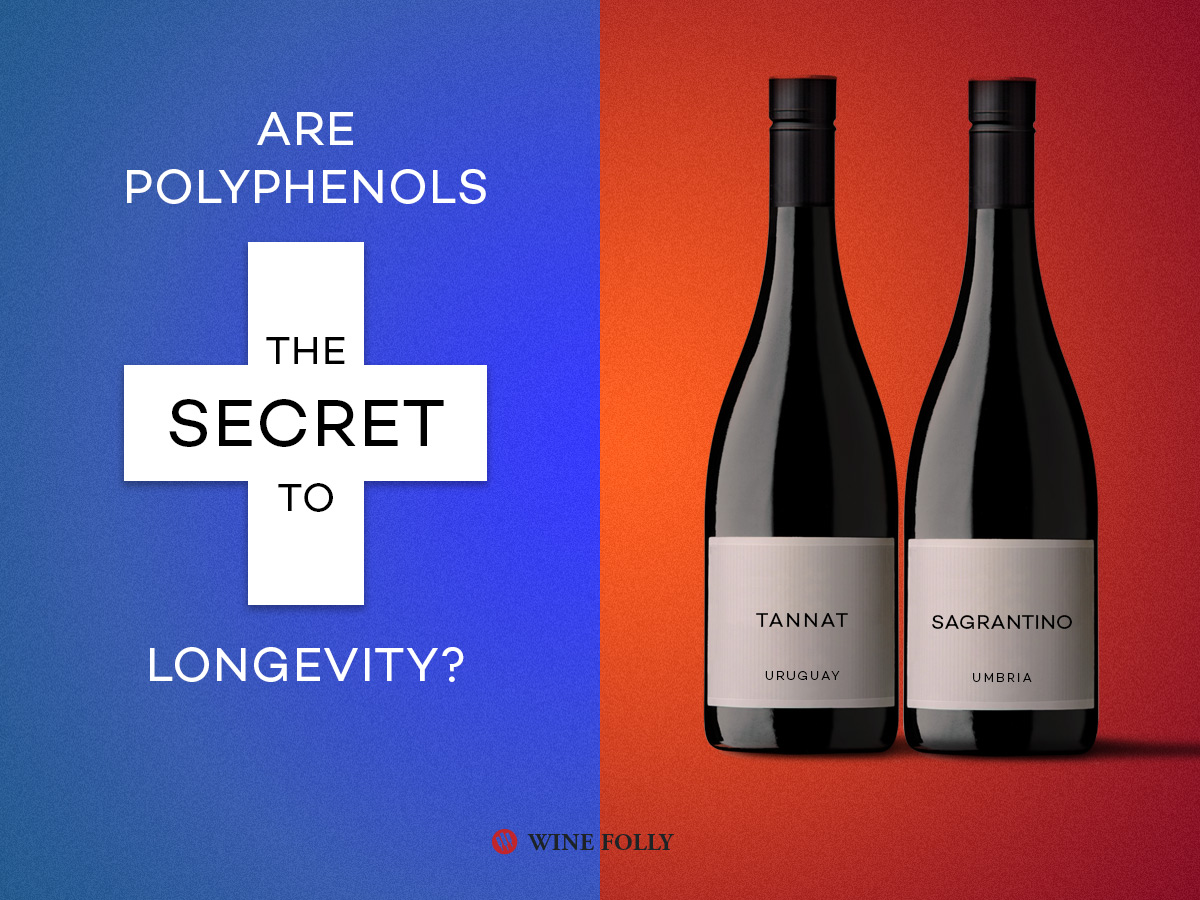 Which Wines Are The Best For Your Health And Why Wine Folly