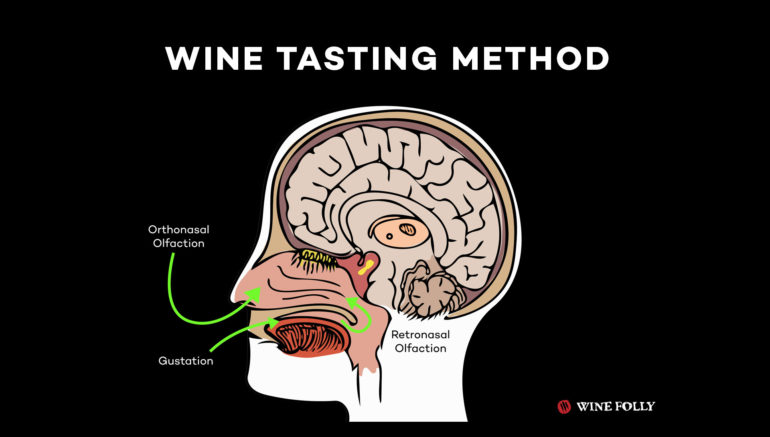 How we taste wine with our noses