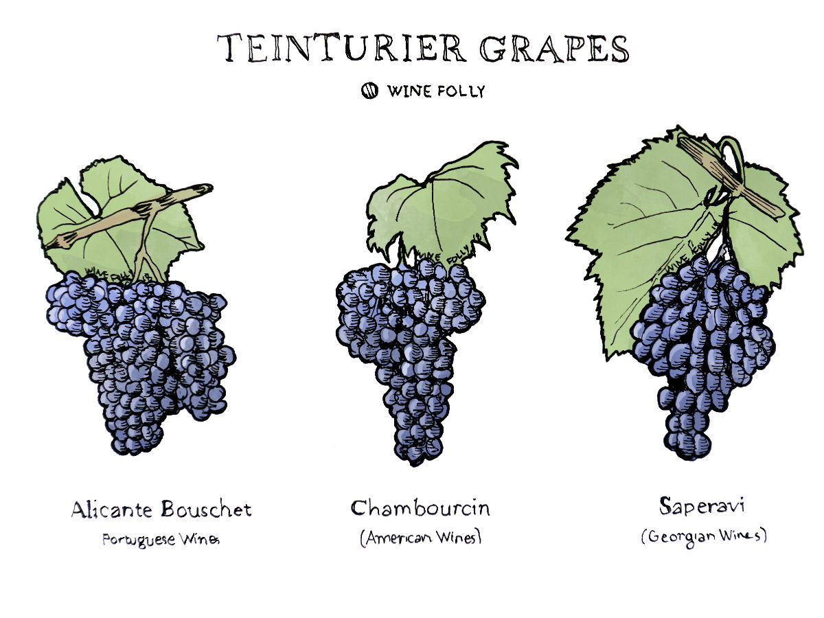 Teinturier Grapes Chambourcin, Saperavi, Alicante Bouschet Illustration by Wine Folly