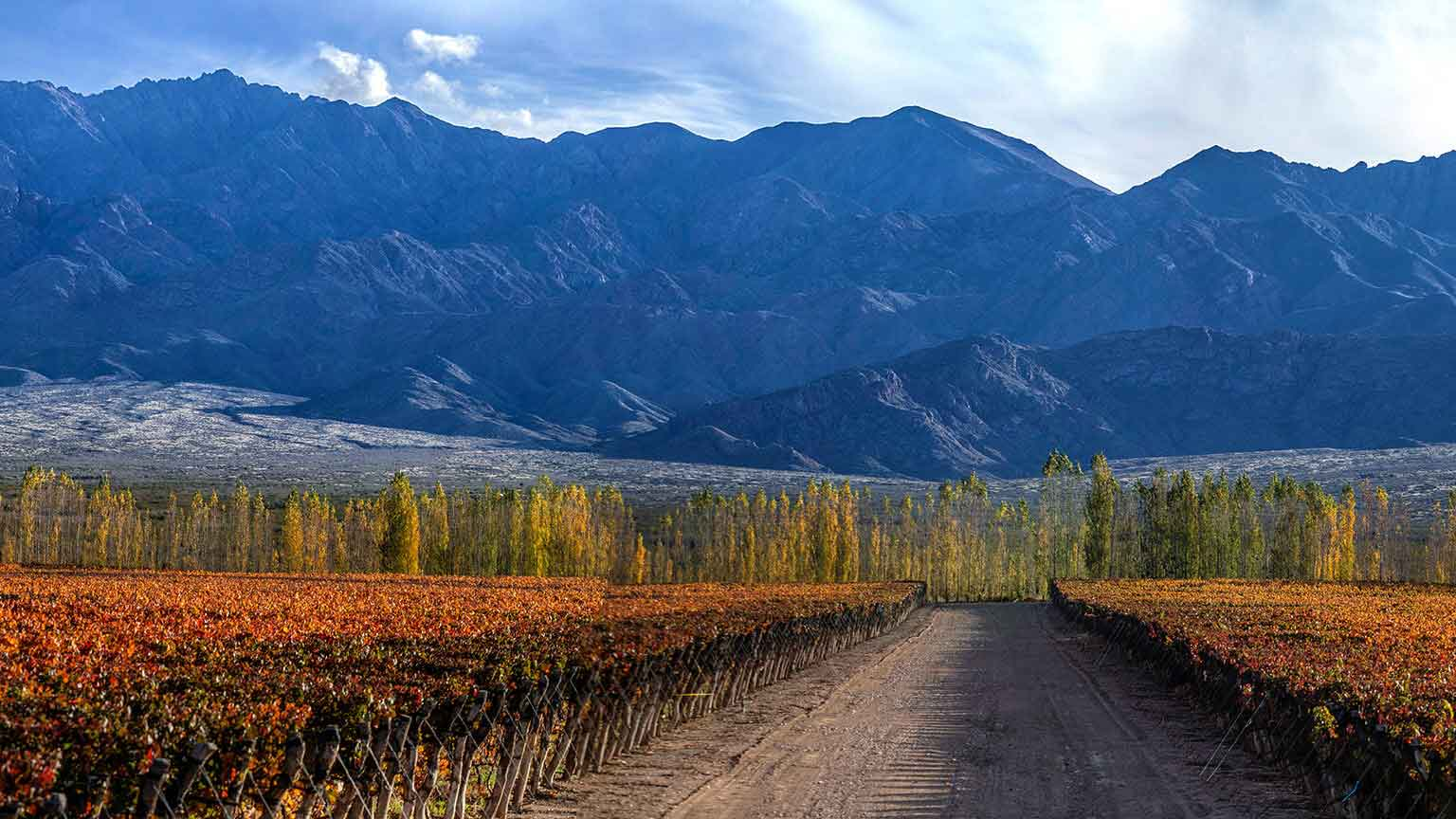 Wine Folly Argentina Wine Guide - Uco Valley Vineyards